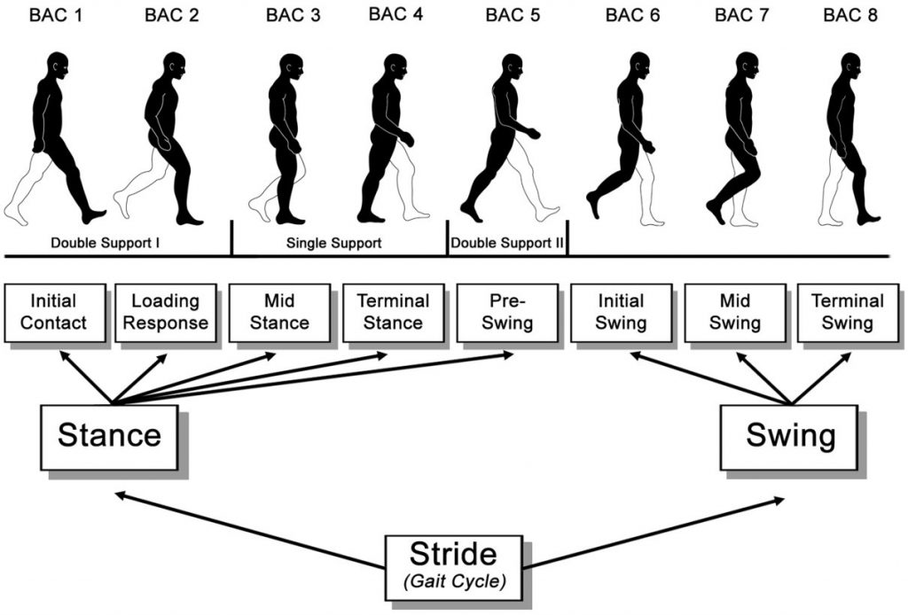 gait cycle phases